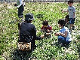 よもぎ餅と野草を食べる(4月)