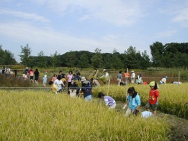稲刈り(10月)